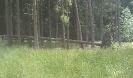 Forstbilder 2011_3