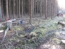 Forstbilder 2011_6