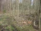 Forstbilder 2011