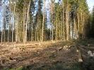 Forstbilder 2011_7