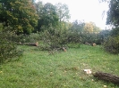 Forstarbeiten 2012_7