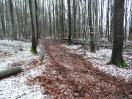 Forstbilder 2013_2